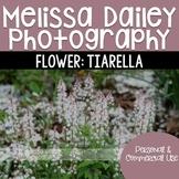 Tiarella Photograph