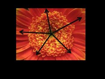 Tibetan Mandala Symmetry Lesson
