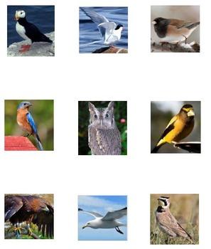 Tic Tac Know -- Birds 2