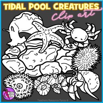 Tidal pool creatures clip art
