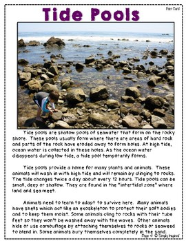 Tide Pools - A Science and Literacy Mini-Unit