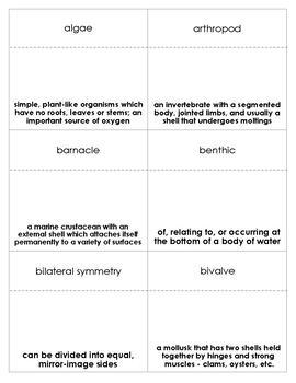 Tide Pools Vocabulary Bingo