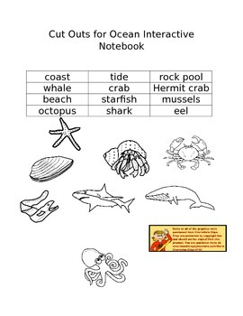 Tide and Rock Pool Interactive Notebook