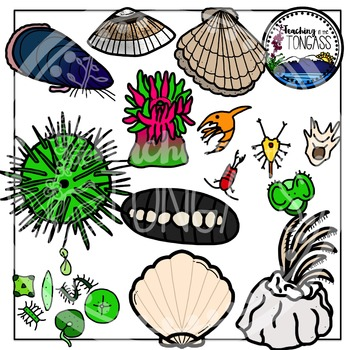 Tide Pool Clipart Bundle