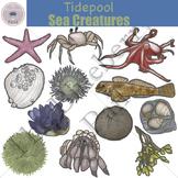 Tidepool Sea Creatures Clip Art Set