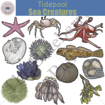 Tidepool Sea Creatures Clip Art Set