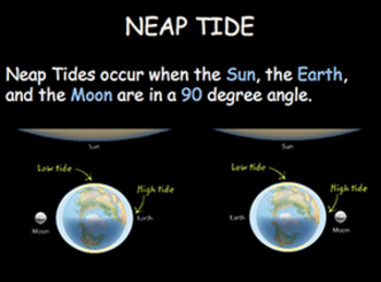 Tides Unit: High/Low, Spring/Neap