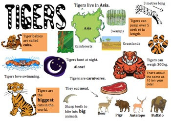 Tiger Information Report Visual