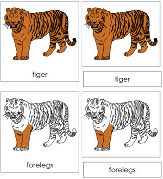 Tiger Nomenclature Cards