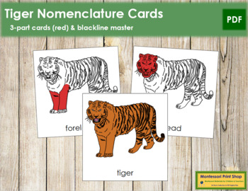 Tiger Nomenclature Cards (Red)