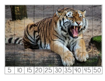 Tiger Number Puzzles