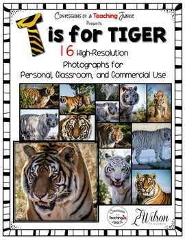 Tiger Photographs for Classroom and Commercial Use