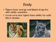 Tiger PowerPoint