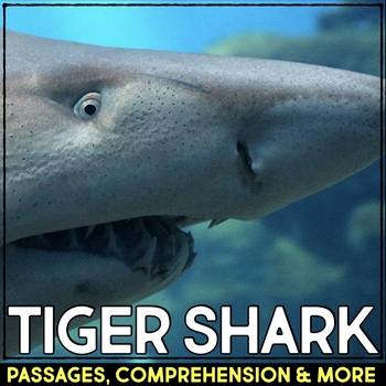Tiger Shark: Informational Article, QR Code Research & Fact Sort