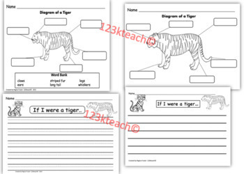 Tigers, Writing Prompts, Graphic Organizers, Diagram
