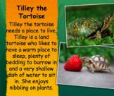 Tilley the Tortoise  Math