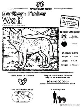 Timber Wolf -- 10 Resources -- Coloring Pages, Reading & Activities