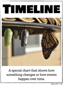 Timelines NO PREP Kindergarten Social Studies Mini-Unit