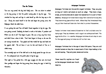 Tina the Tortoise - narrative and informative text comprehension