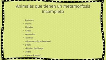 Tipos de metamorfosis