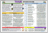 Tissue - Imtiaz Dharker - Knowledge Organizer/ Revision Mat!