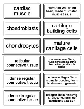 Tissues of the body vocabulary flash cards for Anatomy
