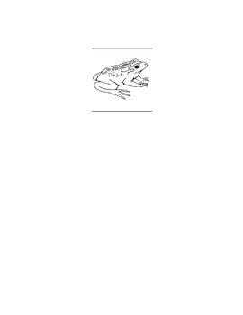 Toad/ Frog Life Cycle Worksheet