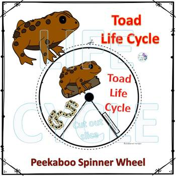 Toad (Life Cycle Spinner)