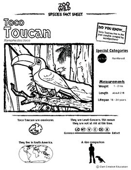 Toco Toucan -- 10 Resources -- Coloring Pages, Reading & Activities