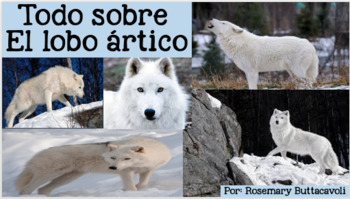 Todo Sobre El Lobo Ártico