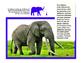 Todo sobre elefantes libro de non-ficcion All About Elephants Spanish book PK-1
