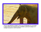 Todo sobre elefantes libro de non-ficcion All About Elepha