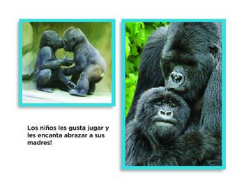 Todo sobre gorilas libro de non-ficcion All About Gorillas Non-Fiction Book PK-1