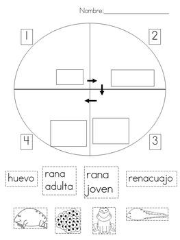 Todo sobre las ranas (English version available in my store too!)
