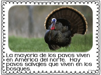 All about Turkeys Todo sobre los pavos