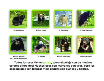 Todo sobre osos libro de non-ficcion All About Bears Spanish book PK-1