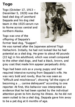 Togo, the Dog Who Saved Nome Handout