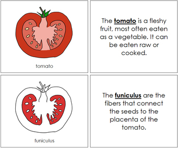 Tomato Nomenclature Book (Red)