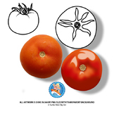 Tomato : Photo, Vector, Black and White Outline