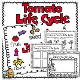 Tomato Plant Life Cycle