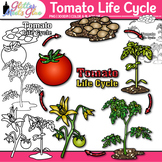 Tomato Plant Life Cycle Clip Art   Summer Plant Graphics for Science Activities