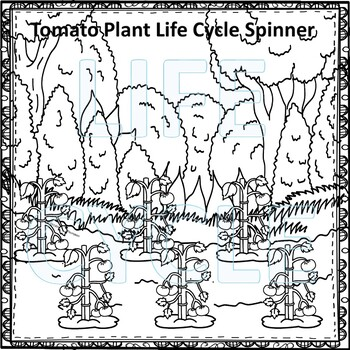 Tomato Plant (Life Cycle Spinner)
