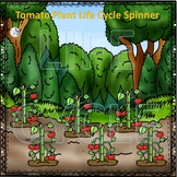 Tomato (Life Cycle Spinner)
