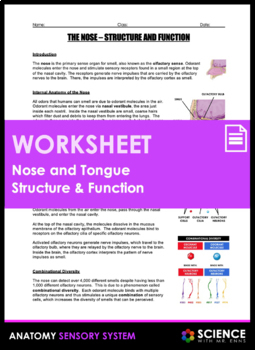 Tongue and Nose Anatomy - Structure and Function (Taste and Smell)