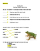 Too Many Frogs Assessment