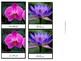 Toob Flowers: Printable Montessori Three Part Cards
