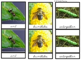 Toob Insects: Printable Montessori Three Part Cards