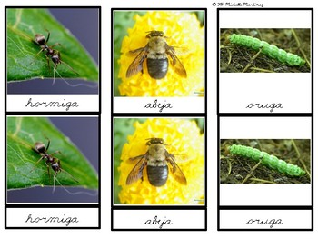 Toob Insects: Printable Montessori Three Part Cards IN SPANISH