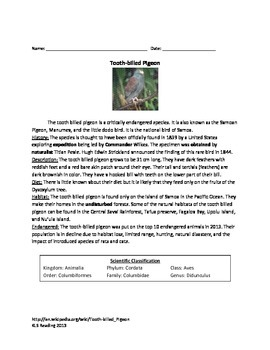 Tooth Billed Pigeon - Article Facts Information Questions Vocabulary