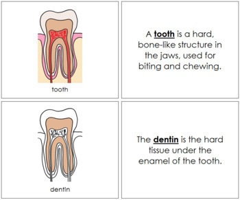 Tooth Nomenclature Book